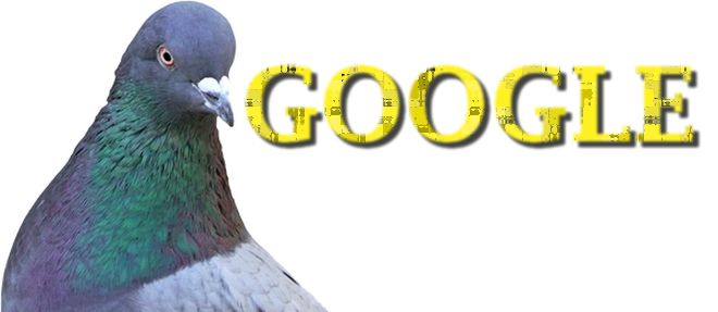 Pigeon7 Dst Wp