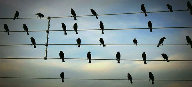 http://fotosfera.com/files/2014/05/birds-on-the-wires-musical-composition-jarbas-agnelli-thumb640.